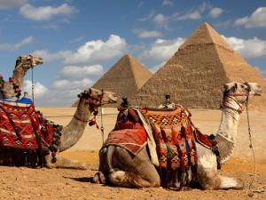 Egypt tips